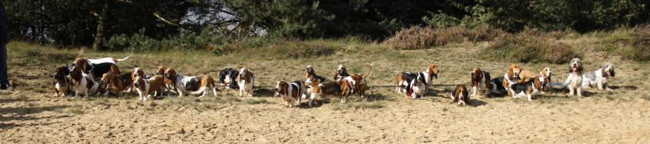 oude hond adopteren aanbod nederland